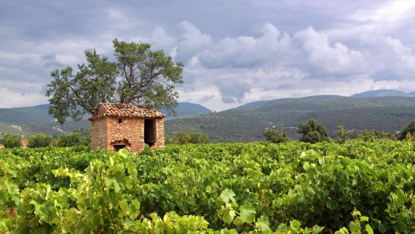 Partez sur la route des vins du Vaucluse, en Provence