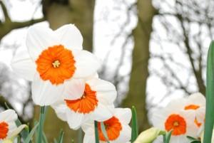 bloom-283020_1280