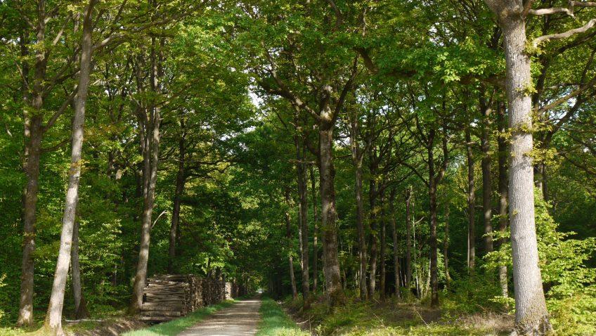 Découvrir la forêt de Rambouillet et ses richesses