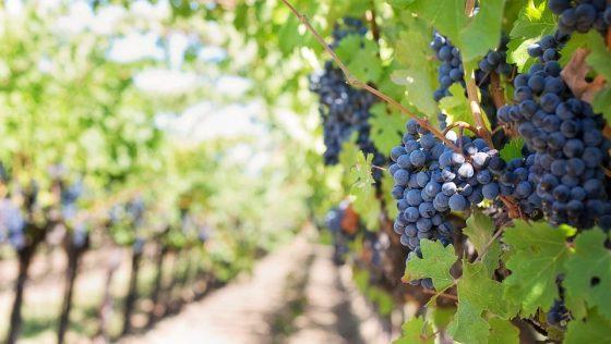 Pourquoi les domaines viticoles sont un bon investissement ?