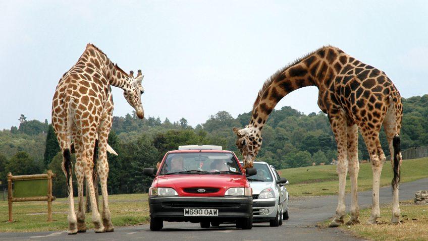 Faire du safari en France, voici des parcs incontournables