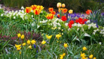 Les secrets d'un beau jardin de printemps