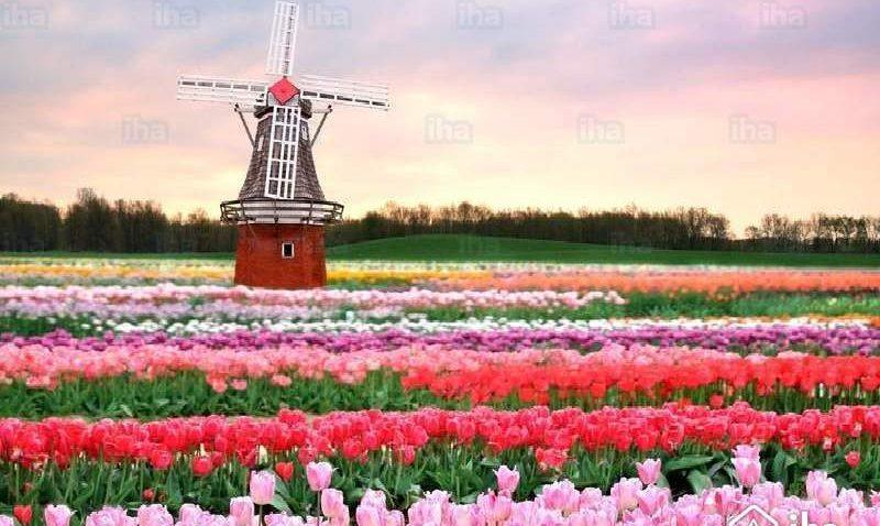 La Hollande, le pays des tulipes